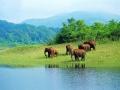 Kerala tourism wild life