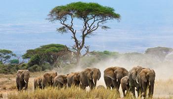 محمية الحياة البرية